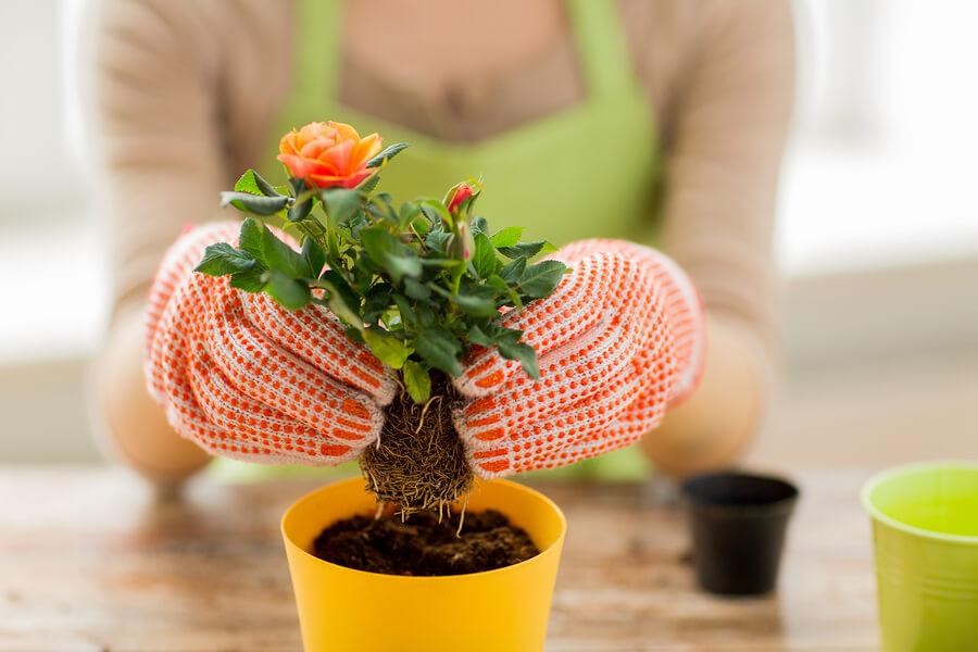 Biljke u saksiji